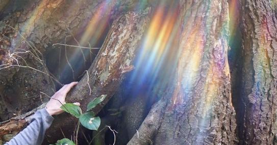 rainbow-hand.jpg